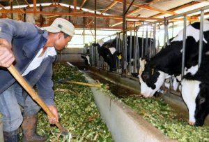 Ngành Chăn nuôi- Con đường kĩ thuật hóa nông nghiệp Việt Nam
